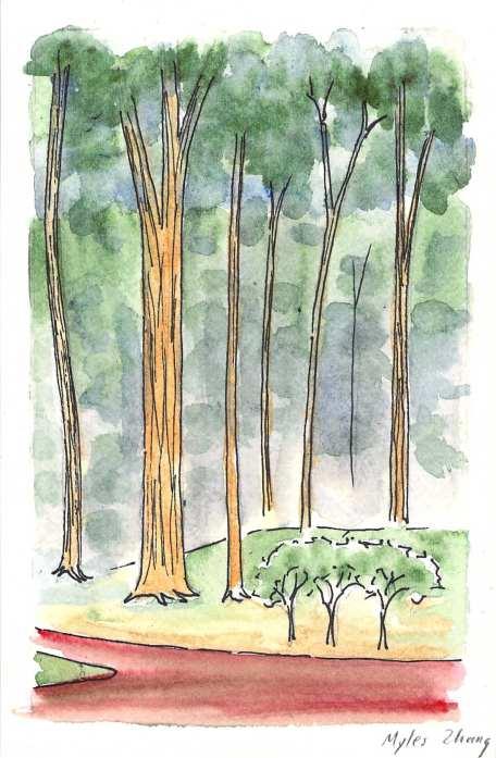 11-21-2014 trees