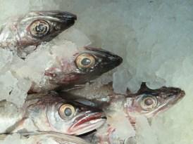 Seafood on Mott Street