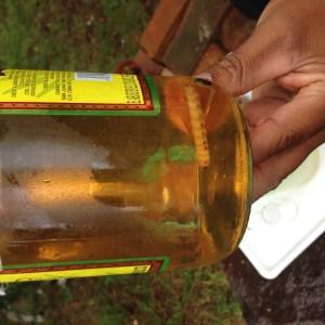 Mezcal - mexikanischer Schnaps, typischerweise mit Wurm in der Flasche