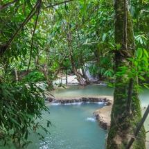 through the jungle