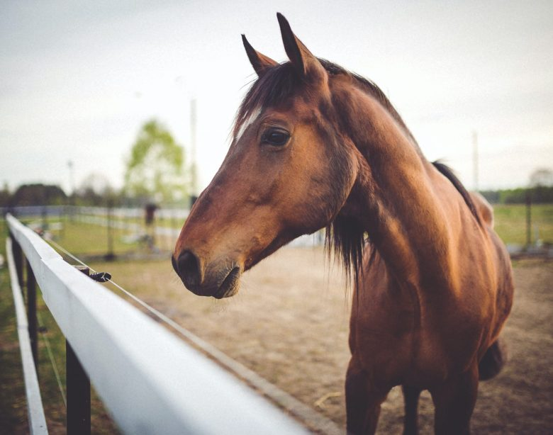 How to evaluate your horse's body condition