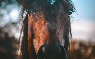 Don't make these mistakes when buying a horse