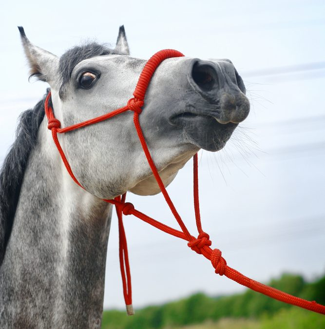 Horse showing whites of the eyes