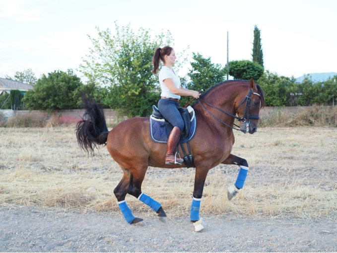 Laura and PRE stallion Impacto from Granada doing the piaffe