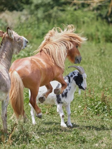 How to find a companion for your horse when you can't afford another horse