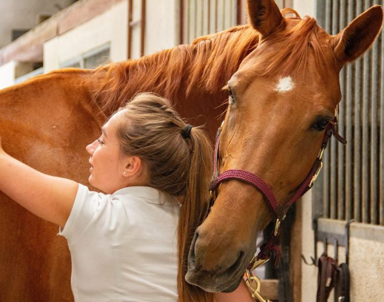 Why should you massage your horse?