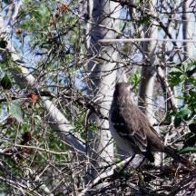 Vogelschau im Reservat