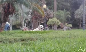 hund-doramas-park.jpg
