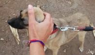 hund-finca-de-osorio-teror-las-palmas.jpg