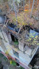 Blick von oben auf Beelitz-Heilstätten Ruine, auf der Moos und Bäumchen zu sehen sind.