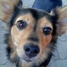 Mein neuer Freund, ein Hund von der Hafenküche in Berlin, schaut in meine Kamera.