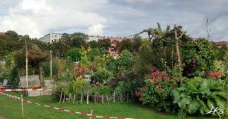 Foto eines Gartens im Allmende-Kontor auf dem Tempelhofer Feld