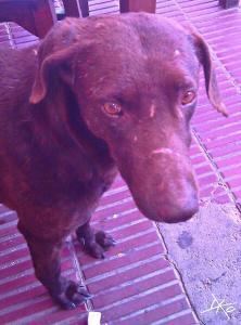 Perro en San Marco