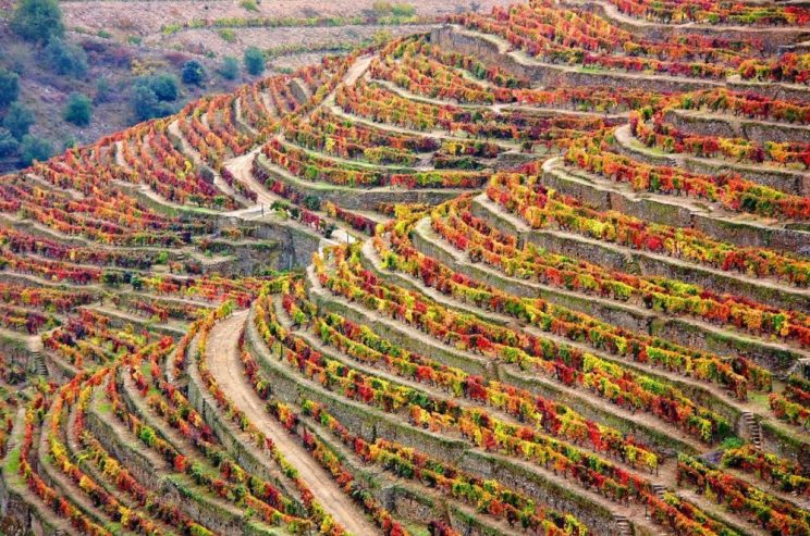 Vineyards on the slopes of the Douro Valley in Autumn