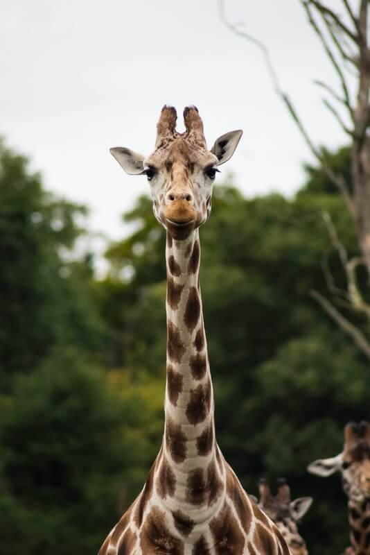 The giraffes are just some of the animals you can see from Regents canal so it's a great London walk for kids and adults alike.
