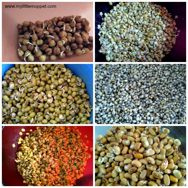 How to sprout grains and beans for sathumaavu powder for babies