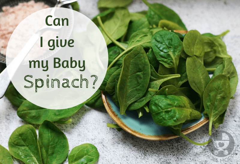 Spinach is one of the trickiest vegetables to feed kids. That's why most Moms want to introduce it as soon as possible and ask: Can I give my Baby Spinach?