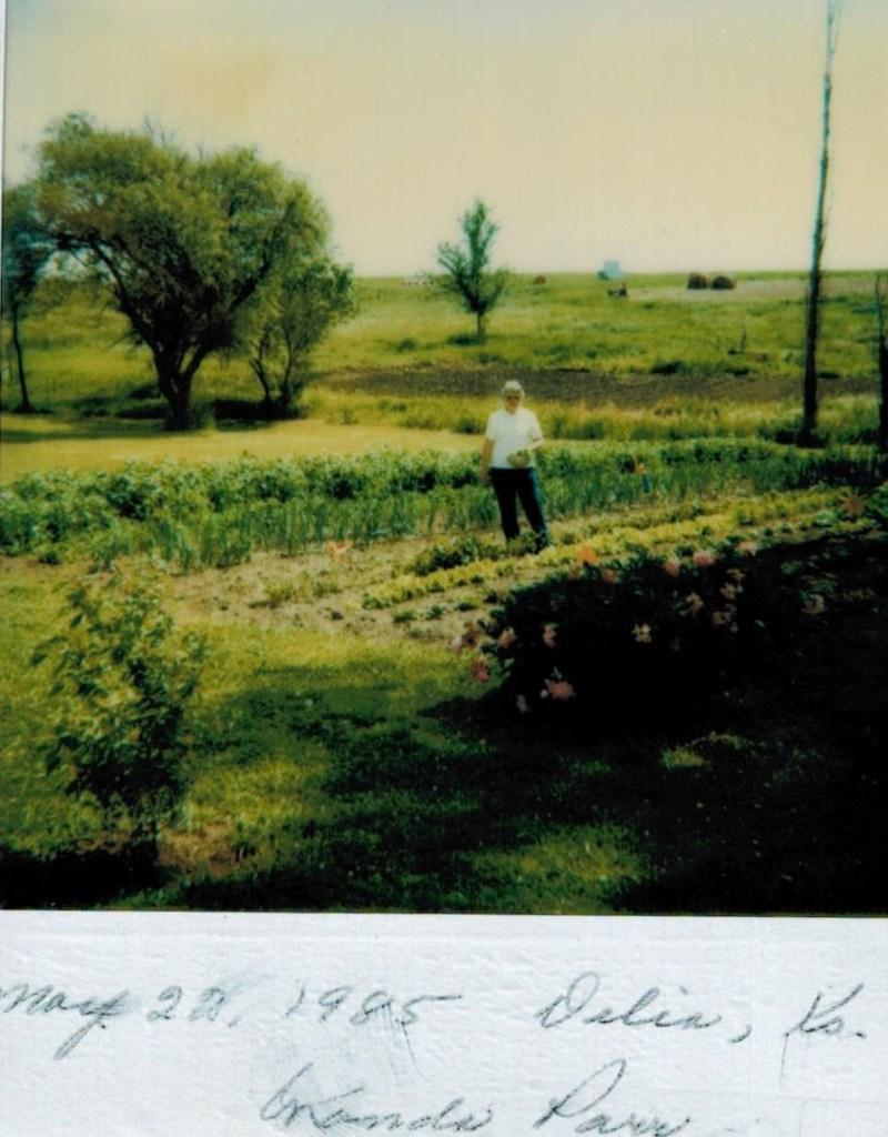 Wanda's garden (3)
