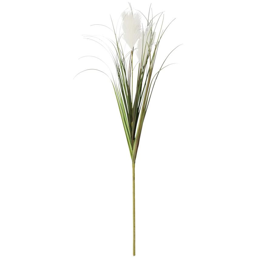 Fleur gynérium blanche