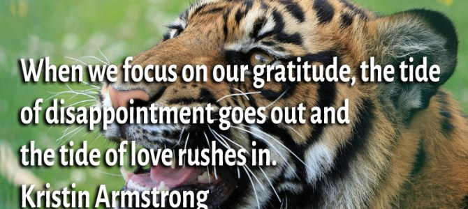 When we focus on our gratitude the tide of love rushes in