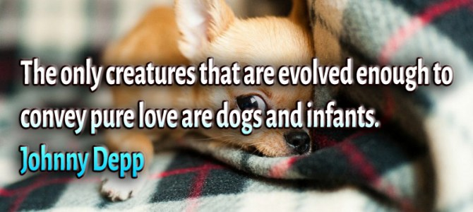 The only creatures that convey pure love are dogs and infants