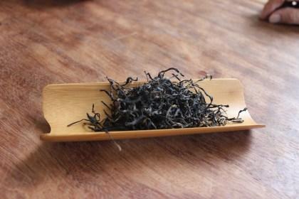 Strain 21 black tea