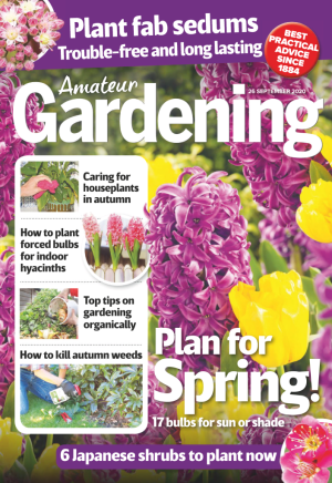 thumbnail of Amateur Gardening 26.09.2020