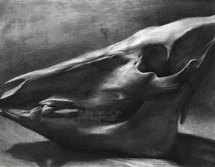"Boar Skull,  Graphite on Paper, 9""x12"""