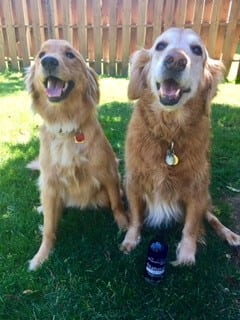 Rockwell pets pro review natural dog shampoo reivew