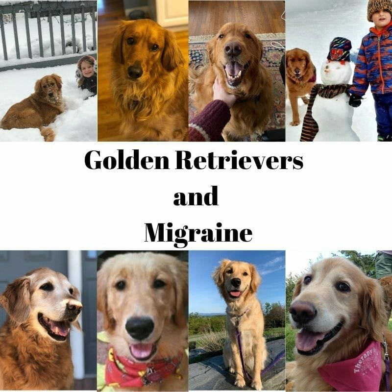 Golden Retriever's personality