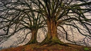 Java's missing TreeMap