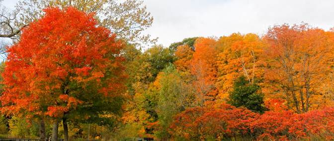 Fall Time Colours are a Sight to See in Mississauga