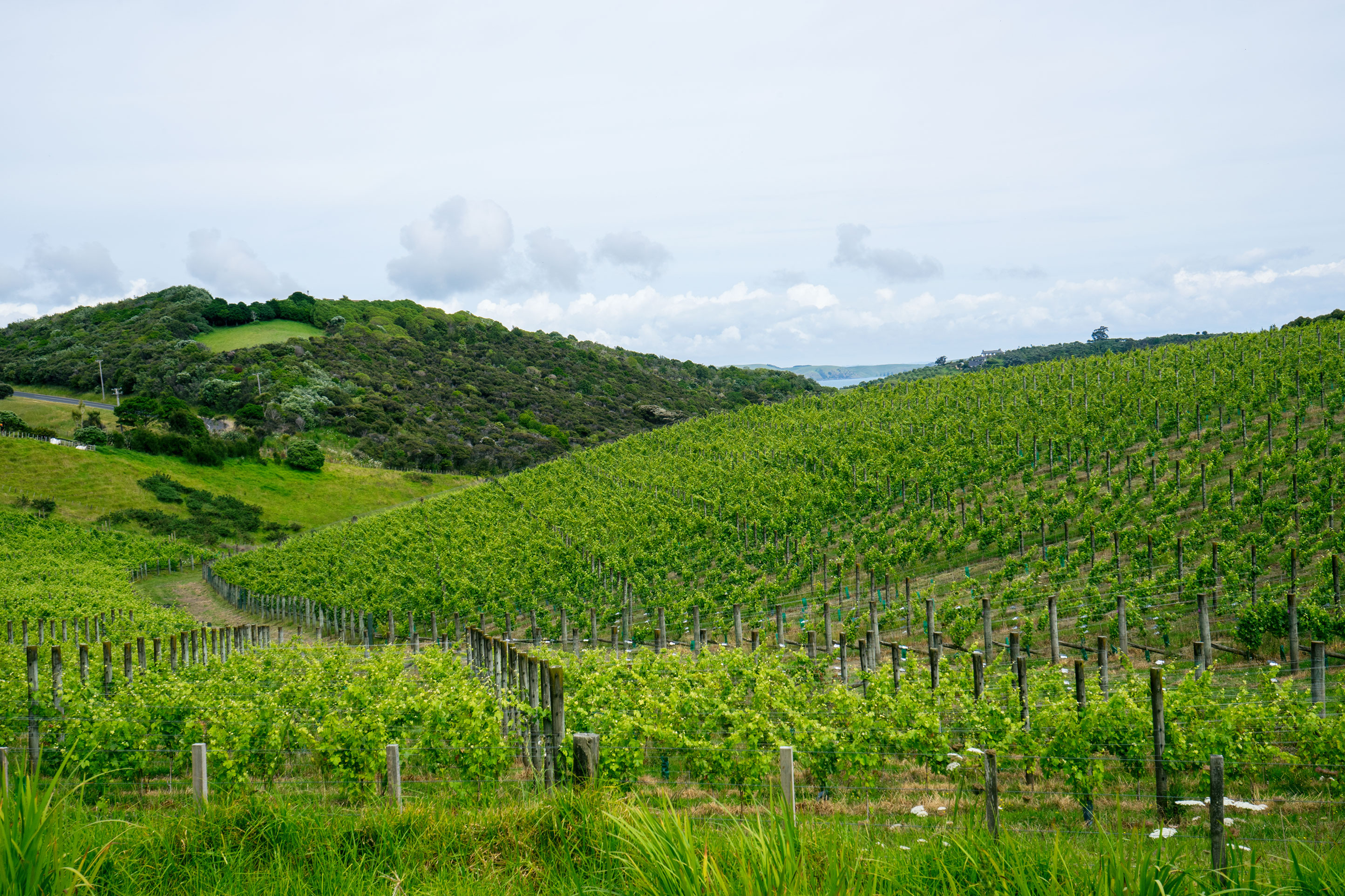 Vineyard View Waiheke