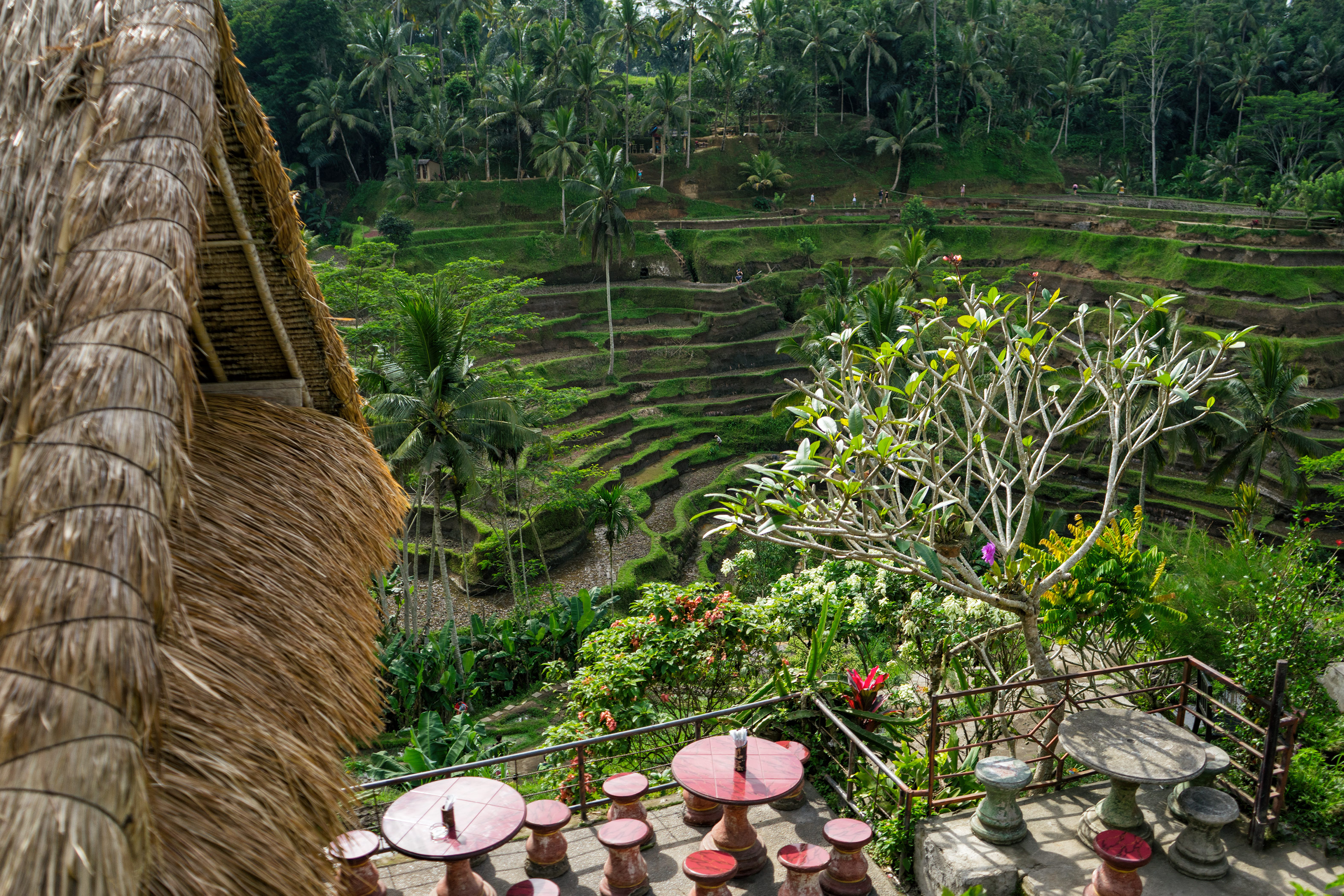Bali Ubud Tegalalang Rice Terraces Restaurant View