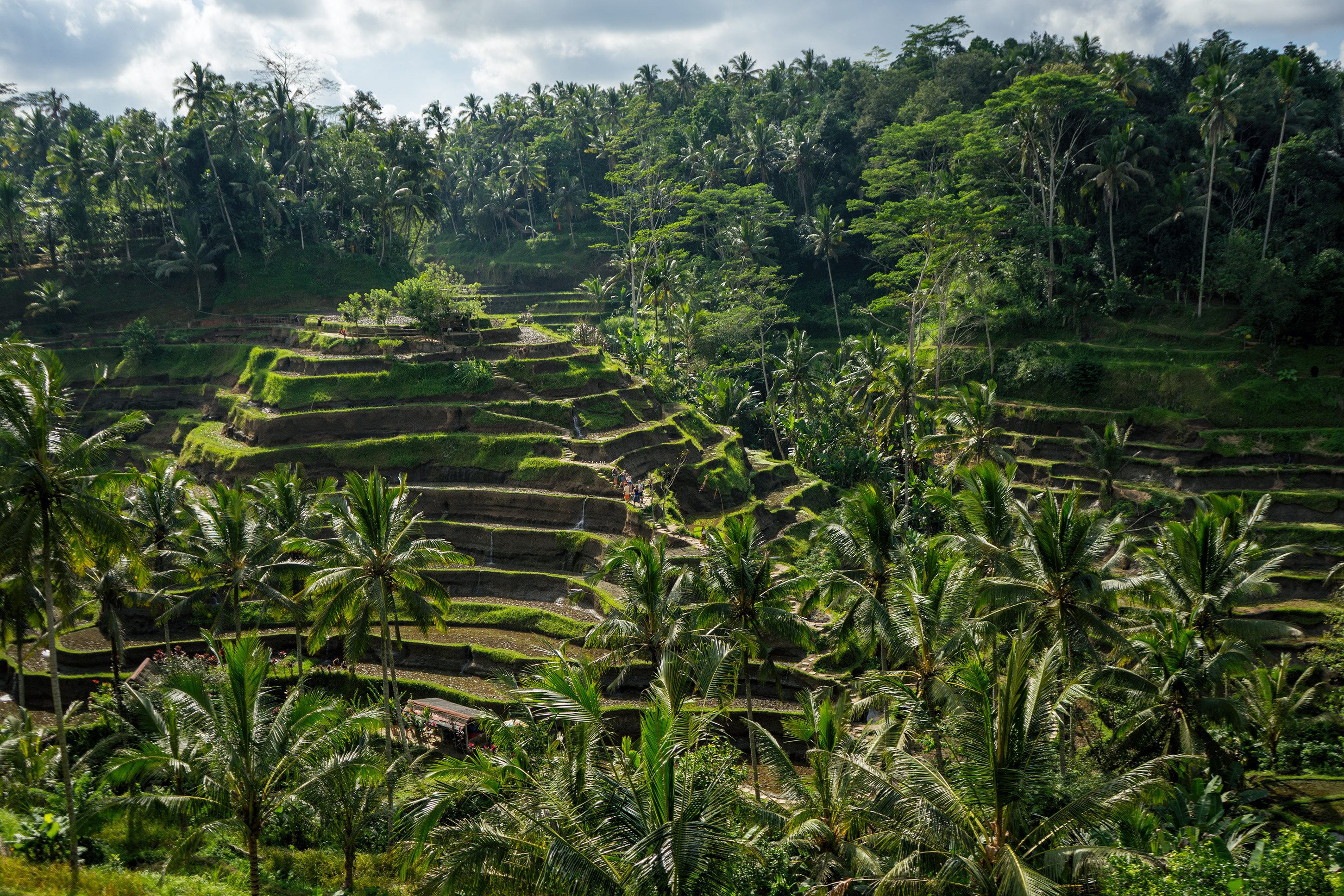 Bali Ubud Tegalalang Rice Terraces View