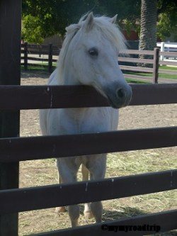 stanford-cheval