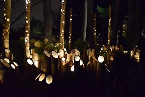 bambou-jardin-japon