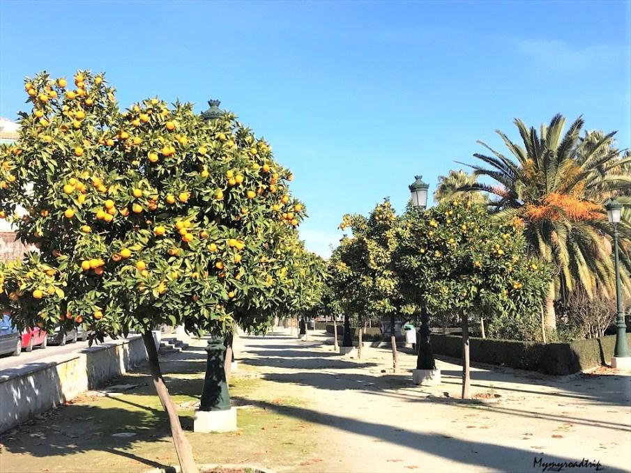 orangers grenade