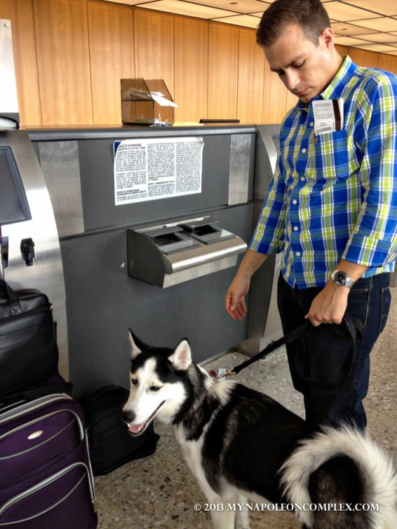 Picture of husky at Dulles International Airport
