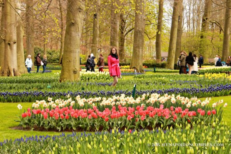 Picture in Keukenhof Garden, the Netherlands.