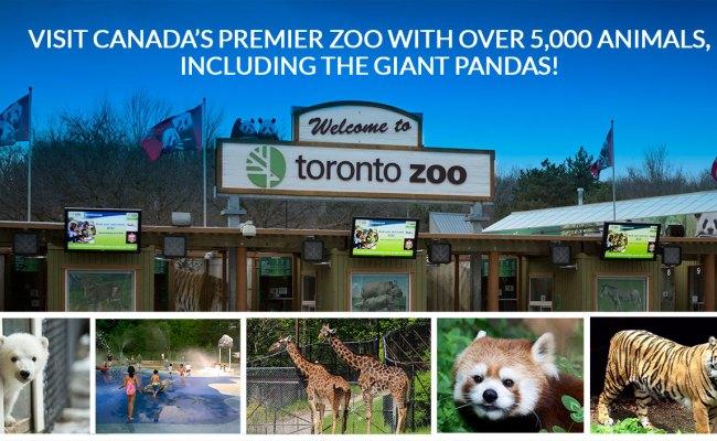 Toronto Zoo Niagara Falls Bus Tour From Toronto