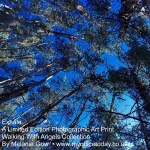 Exhale, 1/14 in the Walking With Angels Collection, by Melanie Gow. Limited Edition Photographic Art Print