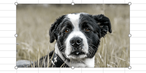 How to Change the Color of a Picture in Microsoft Office
