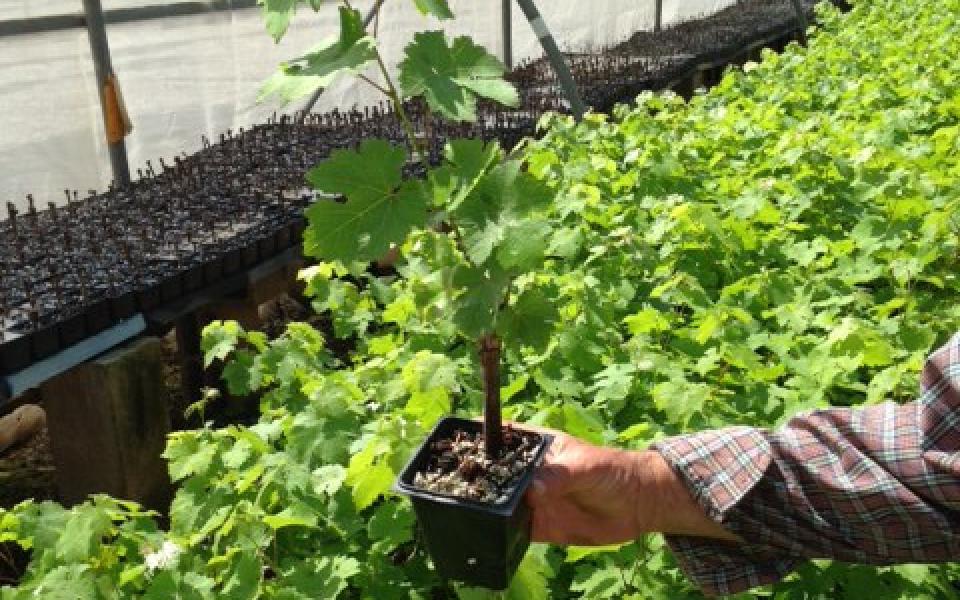 Plant And Tree Israel