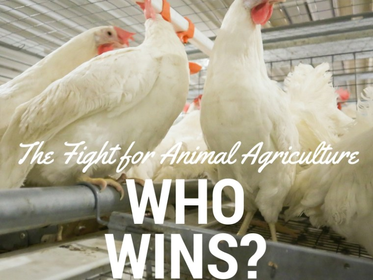 The Fight for Animal Agriculture | Who Wins? via MyOtherMoreExcitingSelf.com #agchat