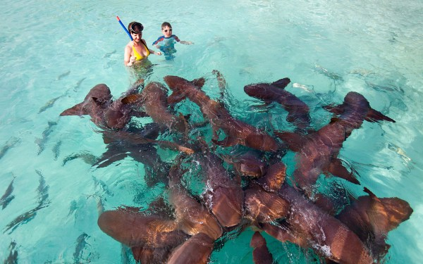 Islands - Of Bahamas