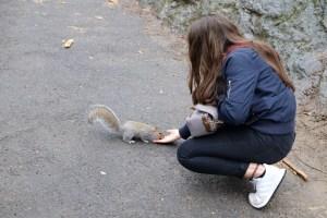 Ecureuils Central Park