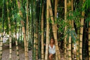 Le jardin botanique de Palerme