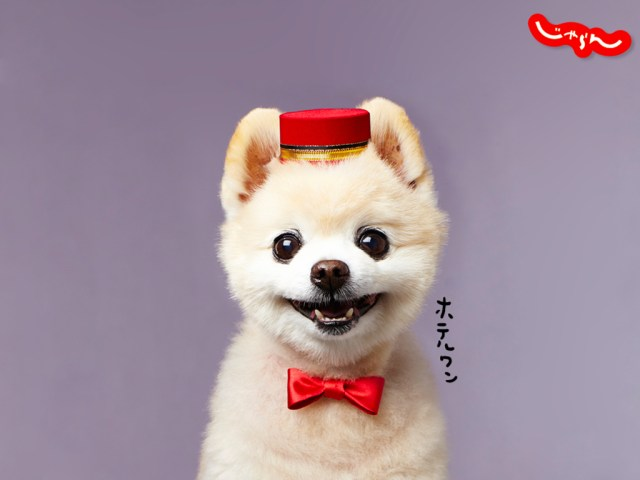 shunsuke_main_1024_768