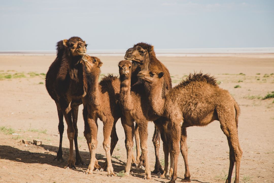 Love Persian idioms and proverbs? Check out these 12 related to animals, and find out the fascinating cultural stories behind them.